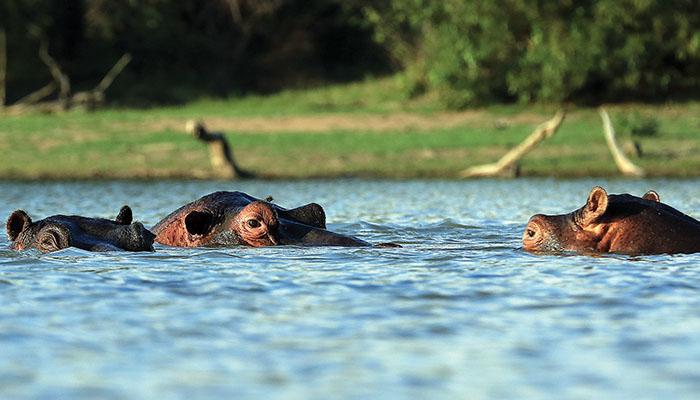 Thaba Khaya Gallery_0018_hippo