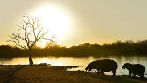 Thaba Khaya Gallery_0019_hippo 1_1 copy