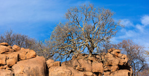 Thaba Khaya Landscape