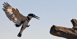 Wild Life and birds