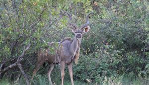 Thabakhaya Wildlife