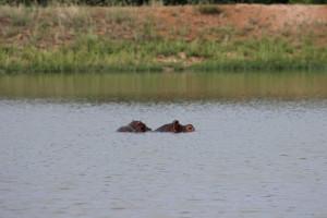 Thaba Khaya Wildlife